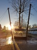 Frozen hanging tree. Frozen roots at an experiment with a hanging tree. Sunrise completes Stock Photography