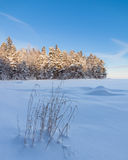 Frozen hay at lake shore and snow covered forest Royalty Free Stock Photography