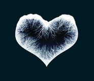 Frozen heart Royalty Free Stock Photo