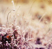 Frozen heather flower Royalty Free Stock Photos