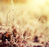 Frozen heather flower Stock Photography