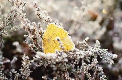 Frozen heather flower Stock Image