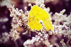 Frozen heather flower Stock Photo