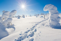 Frozen heavy snow on trees in Lapland with  snow shoe tracks Stock Images