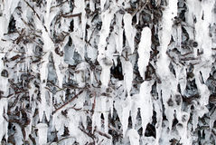Frozen hedge Stock Image