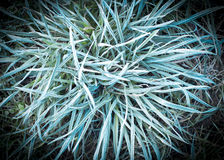 Frozen hoarfrost grass Stock Photography