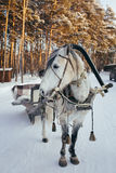 Frozen horse with sleigh Royalty Free Stock Images