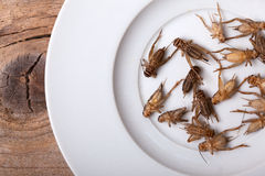 Frozen House Crickets Royalty Free Stock Image
