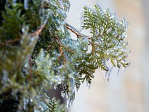 Frozen in the ice branches Royalty Free Stock Photography