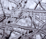 Frozen in the ice branches Royalty Free Stock Photo