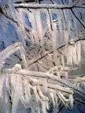 Frozen Ice Branches. A tree has been frozen and ice due to freezing water and cold winter conditions. Icicles and morning light hit the frosted tree branch Royalty Free Stock Photos