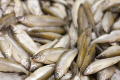 Frozen fish. Freshfish market. Gilt-head bream. Fish sale in market. Sea bream fish on ice. Fresh fish on ice for sale. Frozen ice-cold fish koryuska in the stock photo
