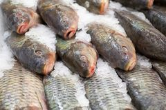 Frozen fish. Freshfish market. Gilt-head bream. Fish sale in market. Sea bream fish on ice. Fresh fish on ice for sale Stock Image