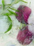 Frozen in ice Stock Photos