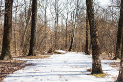 Frozen ice path in spring forest Royalty Free Stock Photos