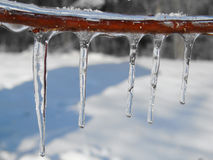 Frozen Icicles Branch Stock Photos