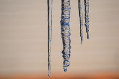 Frozen Icicles Hanging in Winter Stock Images