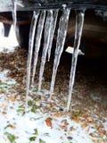 Frozen icicles stock photos