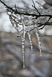 Frozen icicles on the tree branches Stock Photos
