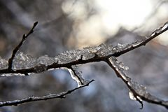 Frozen icicles on the tree branches. the seasons of nature