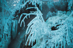 Frozen icicles Royalty Free Stock Images