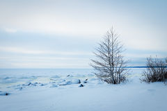 Frozen Icy coastline of bay Stock Images