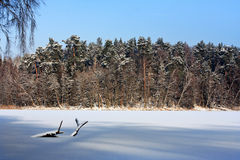 Frozen lake. White frozen water surface of Masuria lake in the virgin forest Royalty Free Stock Image
