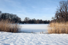 Frozen lake. With reed and trees Stock Photography