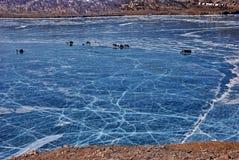 Frozen lake. White cracks in the blue ice of frozen Baikal lake Royalty Free Stock Images