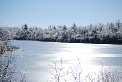 Frozen lake. Wintery frozen lake with snow covered trees Stock Photos