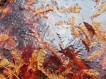 Frozen lake background. With orange pine needles stock photography
