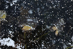 Frozen lake. Background. Royalty Free Stock Images