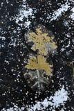 Frozen lake. Background. Stock Photography
