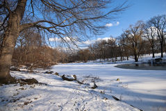 Frozen Lake in Central Park. Wintry scene within Central Park in NYC Royalty Free Stock Image