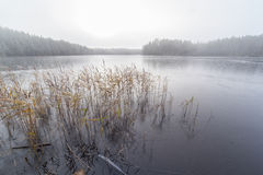 The frozen lake, the first frost Royalty Free Stock Photography