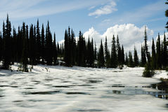 Frozen lake and forest Stock Image