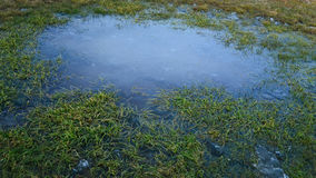 Frozen lake with a little yellow with green grass.  Royalty Free Stock Photos