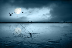 Frozen lake in moonlight royalty free stock photos