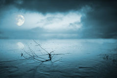 Frozen lake in moonlight royalty free stock images