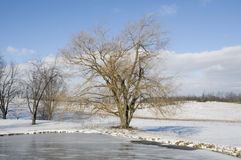 Frozen Lake in Ohio. With Blue Sky During Winter Stock Images