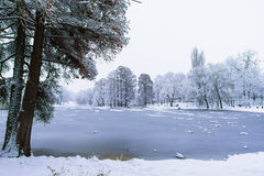 Frozen lake. In park in winter Royalty Free Stock Photos