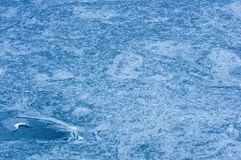 Frozen Lake Patterns Royalty Free Stock Images