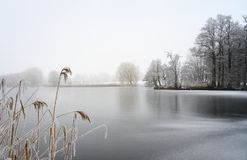 Frozen lake with reed and bare trees covered by hoar frost on a on a cold foggy winter day, gray landscape with copy space. Frozen lake with reed and bare trees stock photography