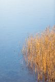 Frozen lake with reeds on shore Royalty Free Stock Photography