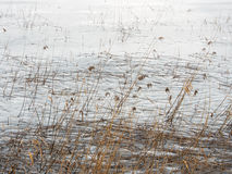 Frozen Lake and Reeds Stock Photography