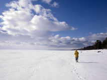 Frozen lake shore Stock Image