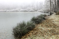 Frozen lake shoreline in fog Stock Image