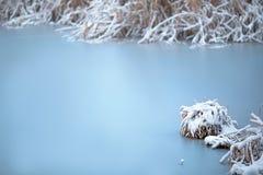 Frozen lake with snow - silent calmness. Royalty Free Stock Photos