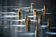 Frozen lake with stumps. Frozen lake with the remnants of a destroyed pier Stock Images