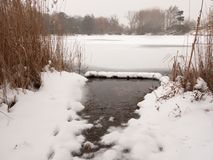 Frozen lake surface winter snow trees reeds water Stock Images